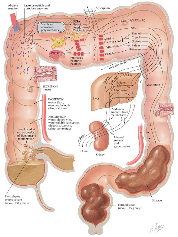 Colon Cleansing - Home Remedies for Colon Cleansing
