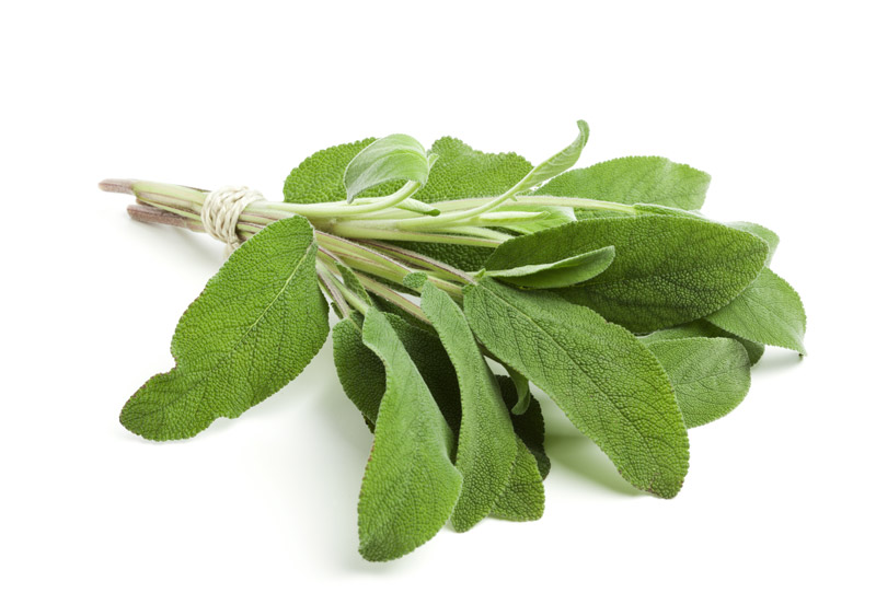 Sage Helps Soothe Sore Throats