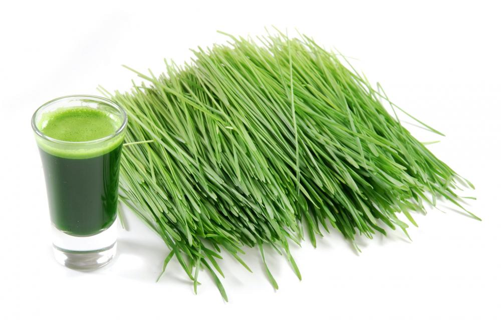 Wheatgrass Nutritional Value