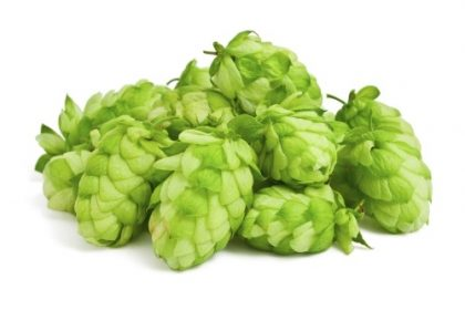 Hops as Medicine for Anxiety