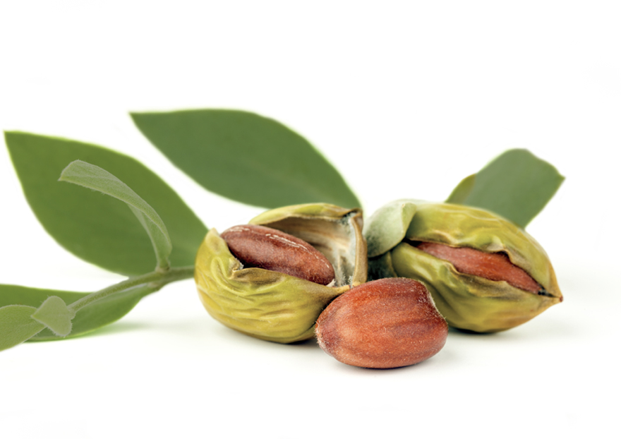 Jojoba as Medicine for Anxiety