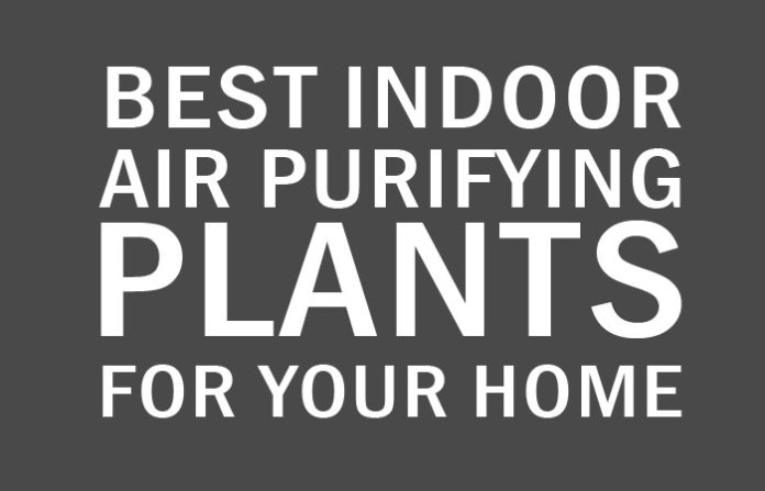 15 Best Indoor Air Purifying Plants For Healthy Home