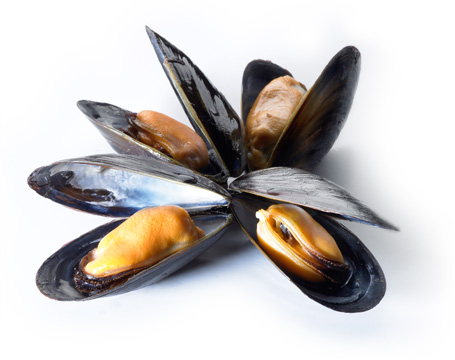 Mussels as a B12 Source
