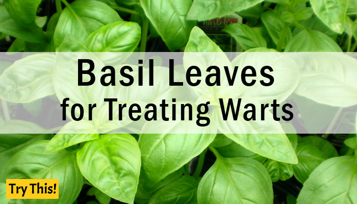 Basil Leaves as a Home Remedy for Warts