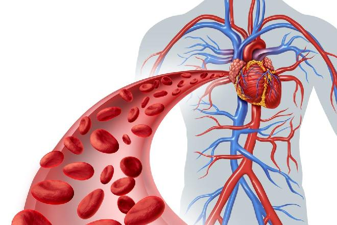Cardiovascular System Protection