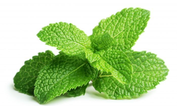 Use Mint for Stomach Pain