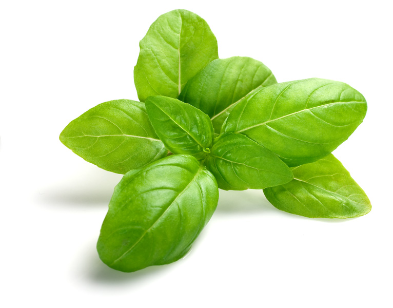 Basil Essential Oil for Eczema