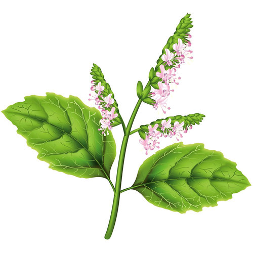 Patchouli Oil Can be Used as an Aphrodisiac