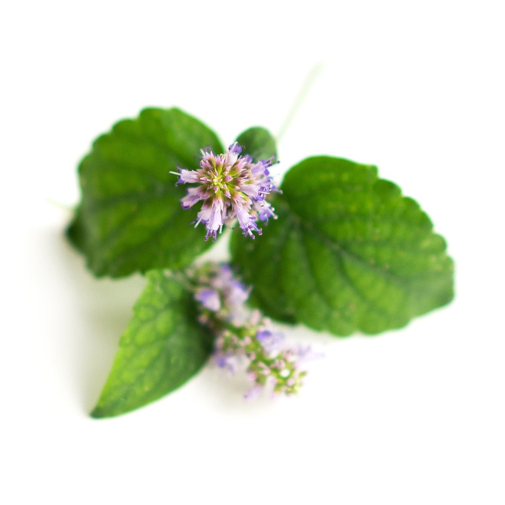 Patchouli Oil is Used to Create Perfumes