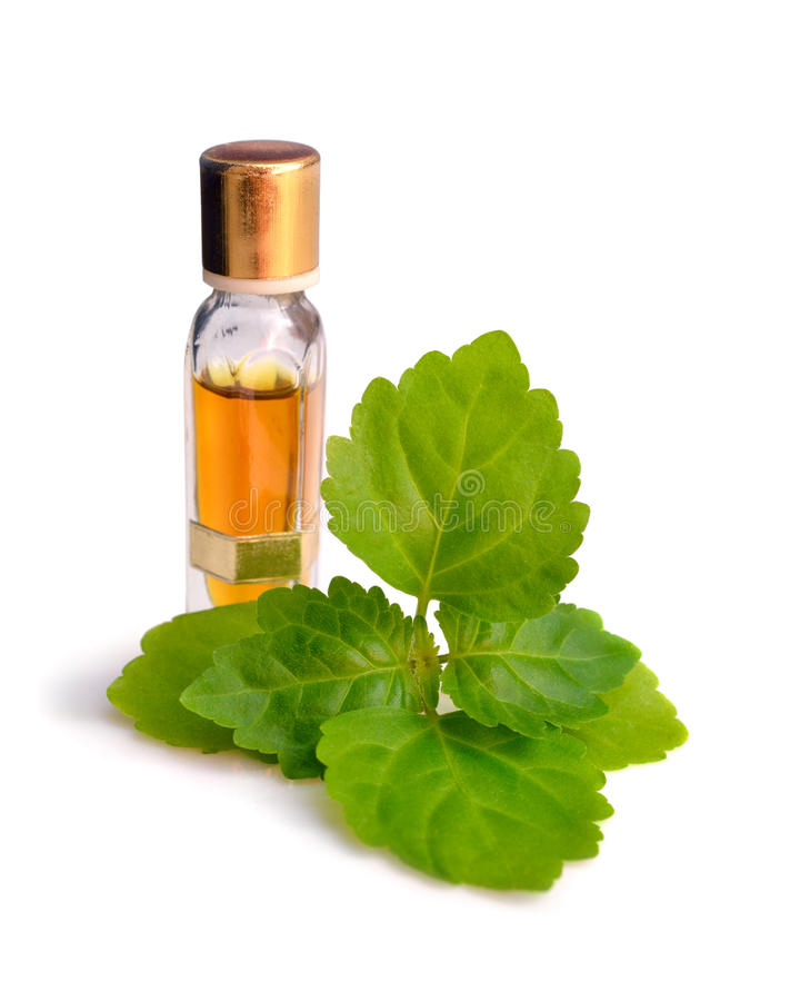Patchouli Oil is Used as a Breath Freshener