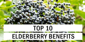 Top 10 Elderberry Benefits