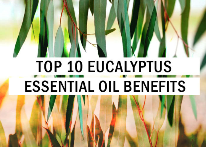 Top 10 Eucalyptus Essential Oil Benefits