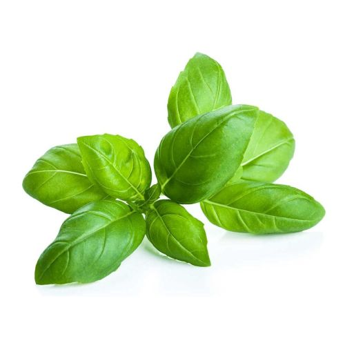 Holy Basil Benefits for Curing Fever