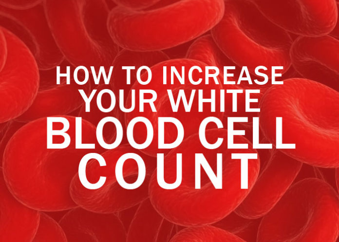Low Blood Count? How to Increase Your White Blood Cell Count