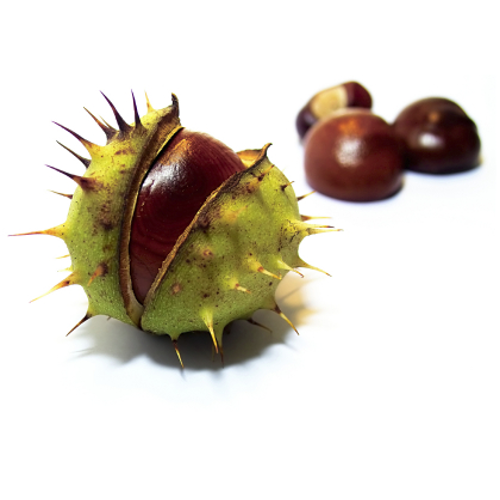 Horse Chestnut Benefits of Treating Rheumatoid Arthritis
